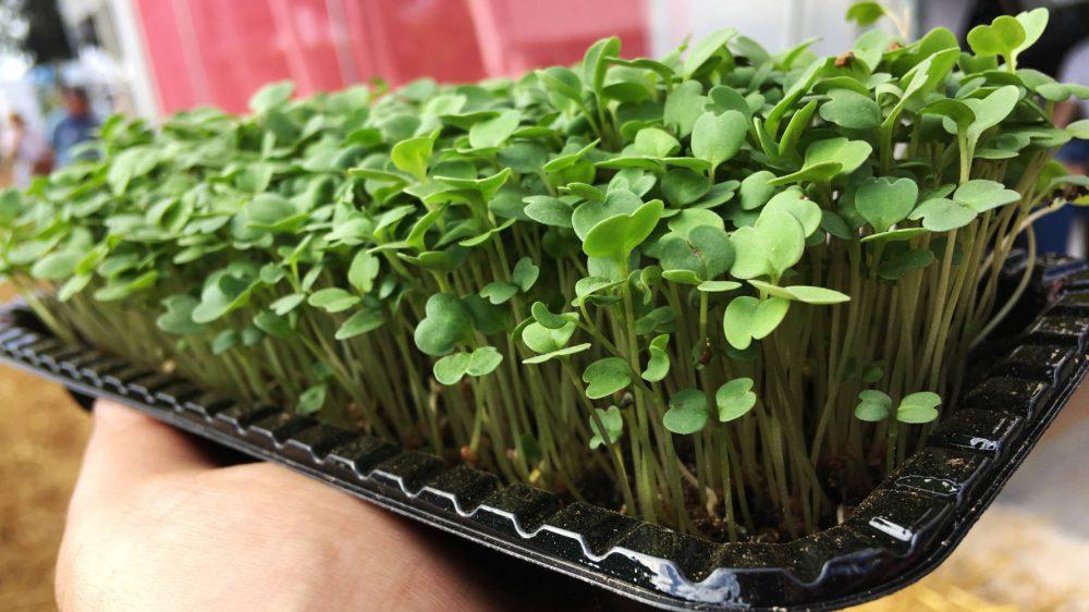 Los microverdes son nutritivos