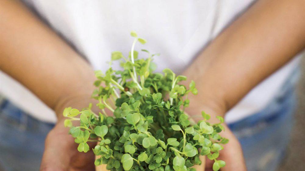 Microverdes: Todo lo que siempre quisiste saber