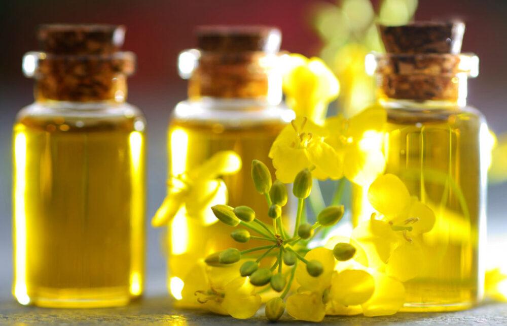 ¿Es saludable el aceite de canola? Todo lo que necesitas saber