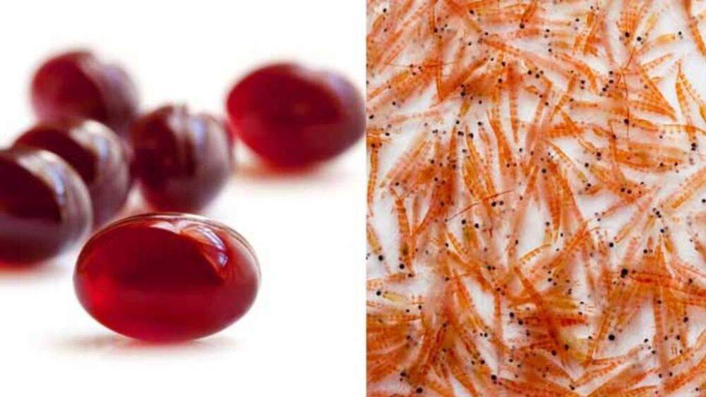 Aceite de krill contra aceite de pescado: ¿Cuál es mejor para ti?