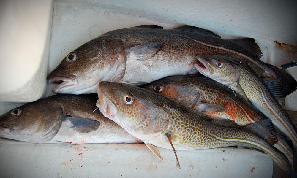 ¿Es saludable el bacalao? Nutrición, calorías, beneficios y más