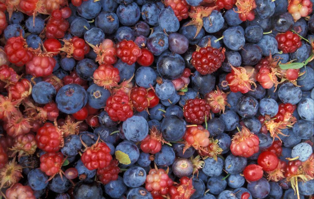 Contienen compuestos vegetContienen compuestos vegetales beneficiososales beneficiosos