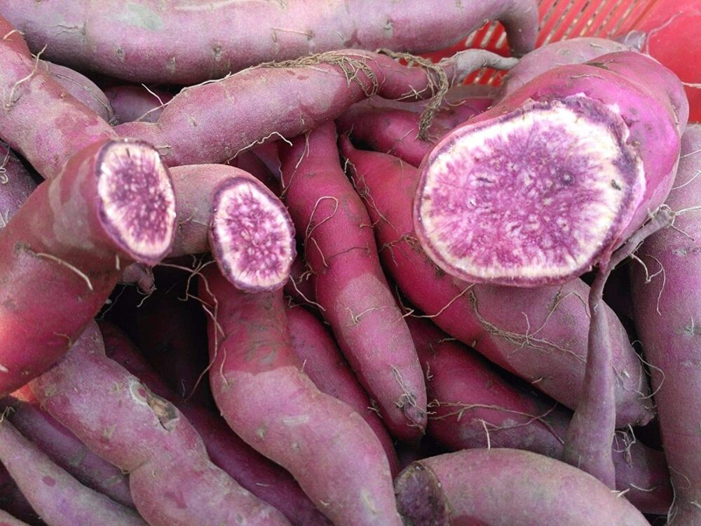 El Ñame purpura puede ayudar a reducir la presión arterial