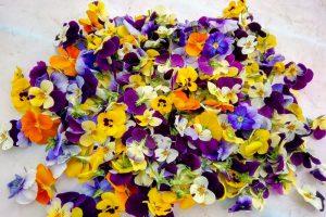 11 Flores comestibles con potenciales beneficios para la salud