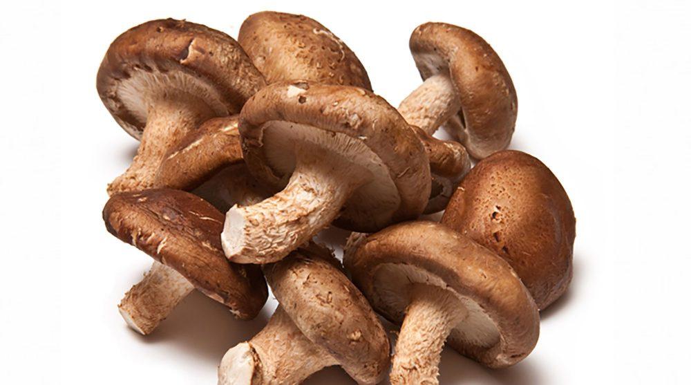 Por qué los hongos Shiitake son buenos para ti