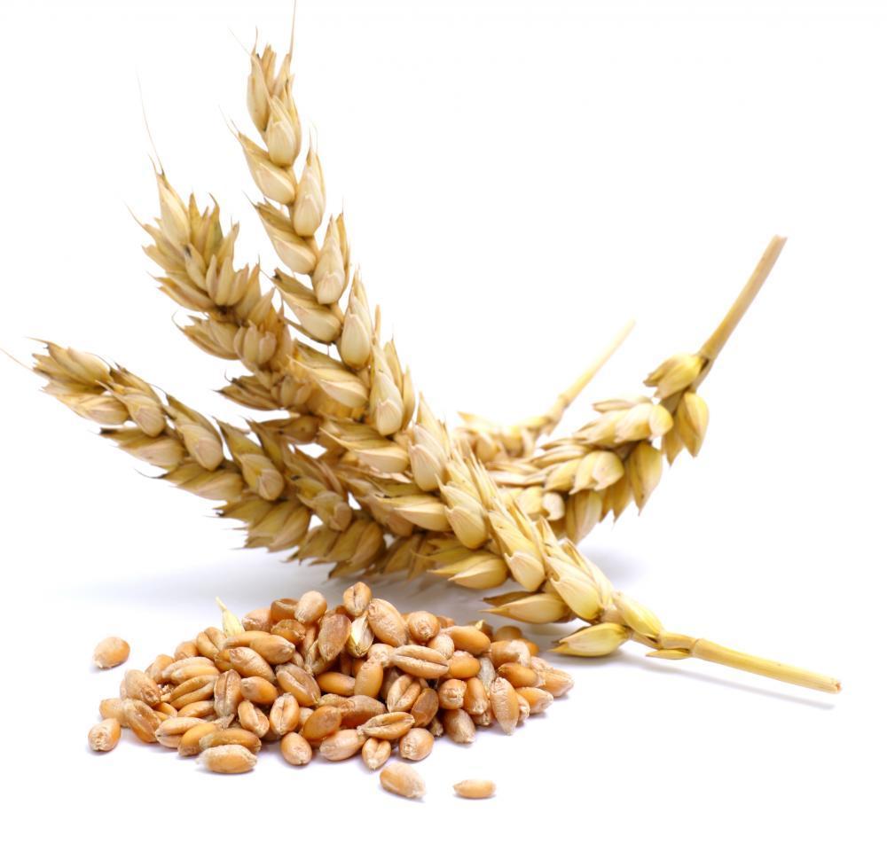 ¿Le gusta la cebada? Nutrición, beneficios y cómo cocinarla