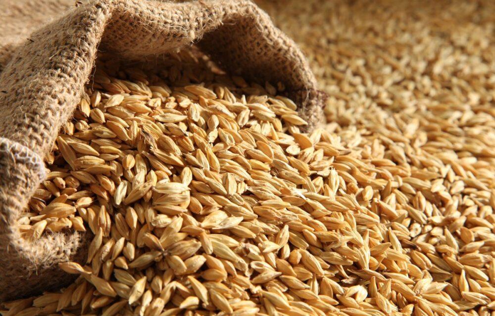 La cebada una buena fuente de nutrientes