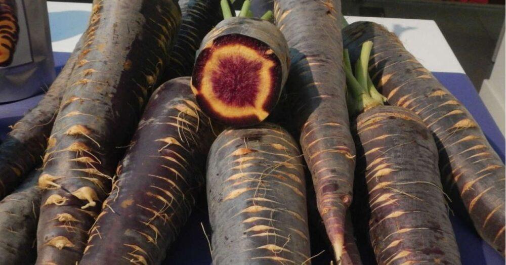 Zanahoria morada ayuda al metabolismo
