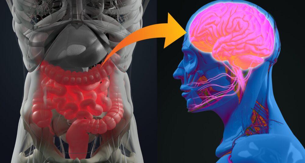 ¿Cómo están conectados tus intestinos y tu cerebro?