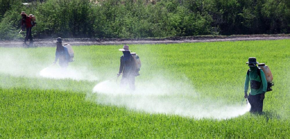 ¿Cuáles son los efectos en la salud de la alta exposición a plaguicidas?
