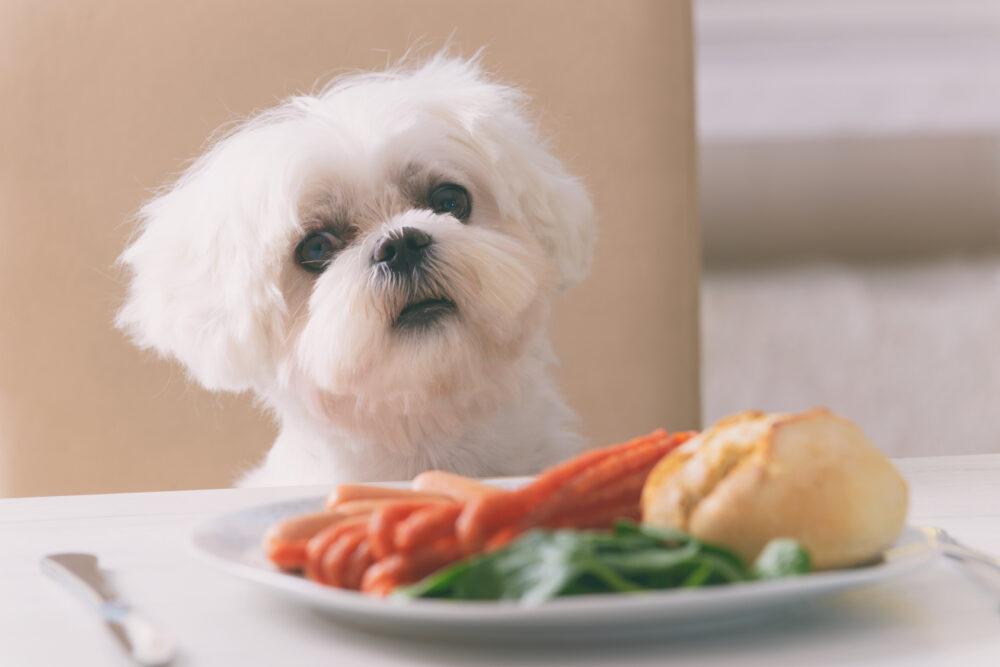 7 alimentos humanos que pueden ser fatales para los perros