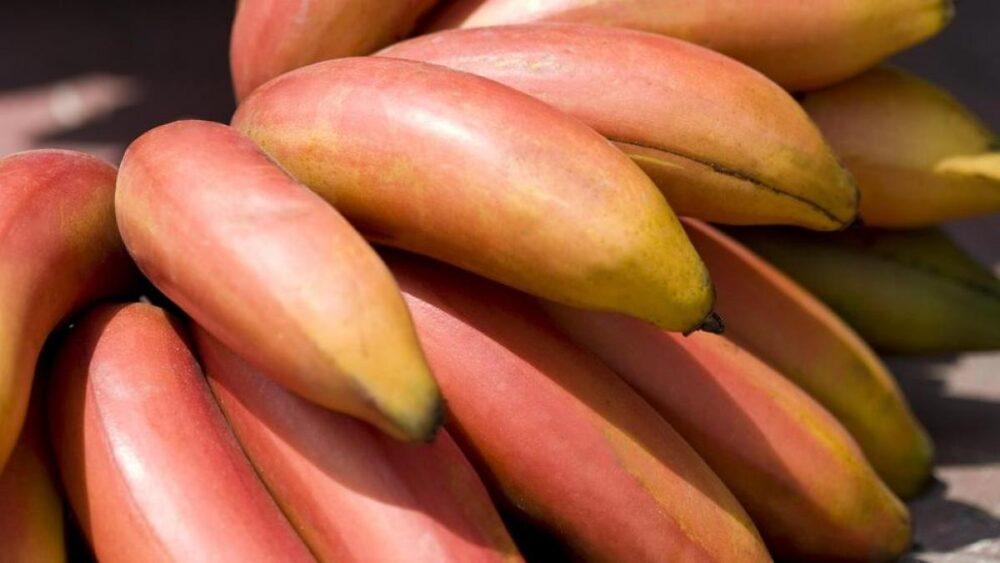 7 beneficios de la banana roja (y cómo se diferencian de las amarillas)