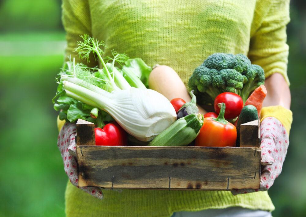Alimentos integrales, dieta a base de plantas: Una detallada guía para principiantes
