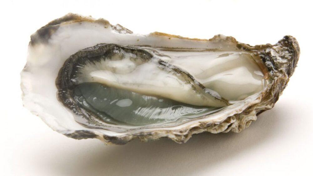 ¿Las ostras son buenas para ti? Beneficios y Peligros