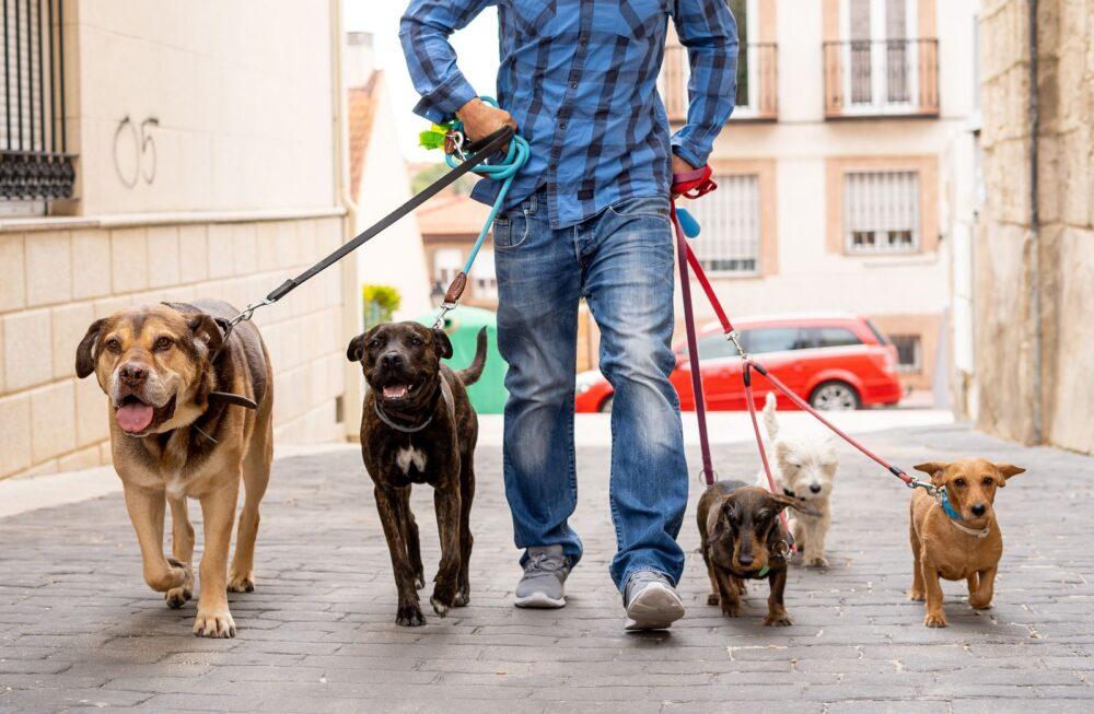 Cuidar mascotas alivia la hormona del estres