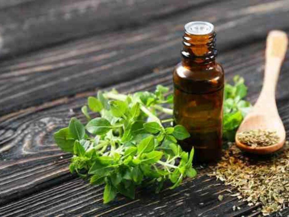 El aceite de orégano ha sido investigado por sus propiedades analgésicas