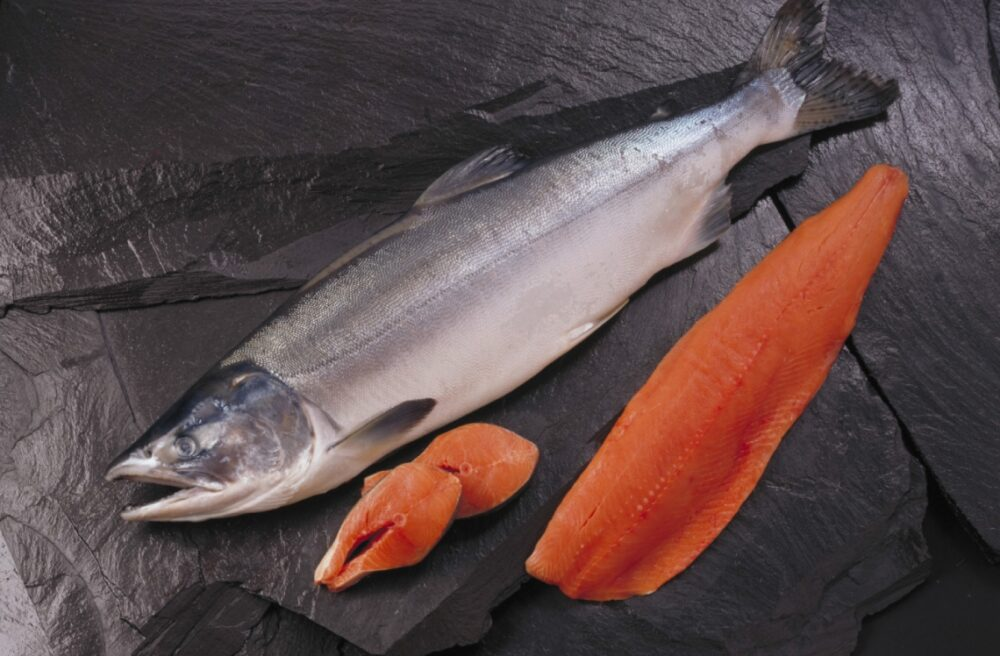 El salmón salvaje contra el salmón de piscifactoría: ¿Qué tipo de salmón es más saludable?