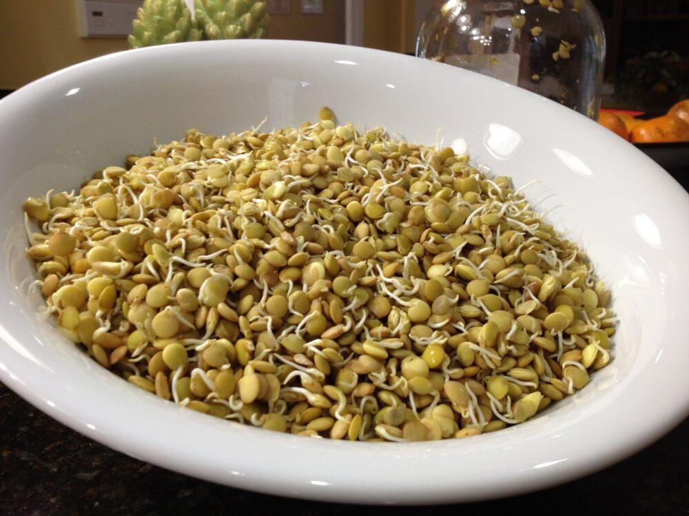 Ezekiel 4:9 Cereales de grano germinado