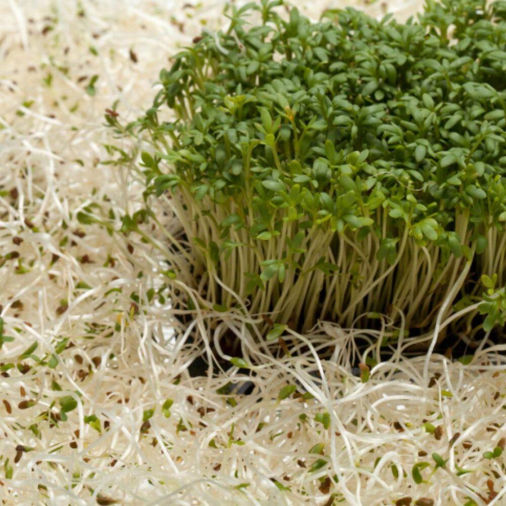 La alfalfa puede ayudar a reducir el colesterol