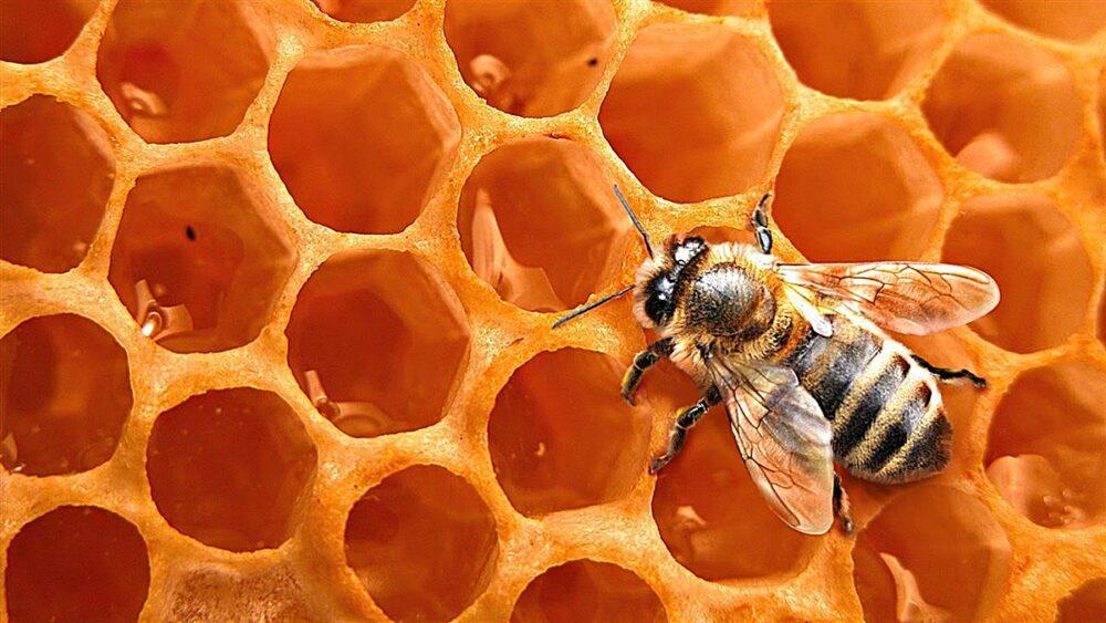 Las abejas tienen enzimas especiales que suprimen el crecimiento bacteriano