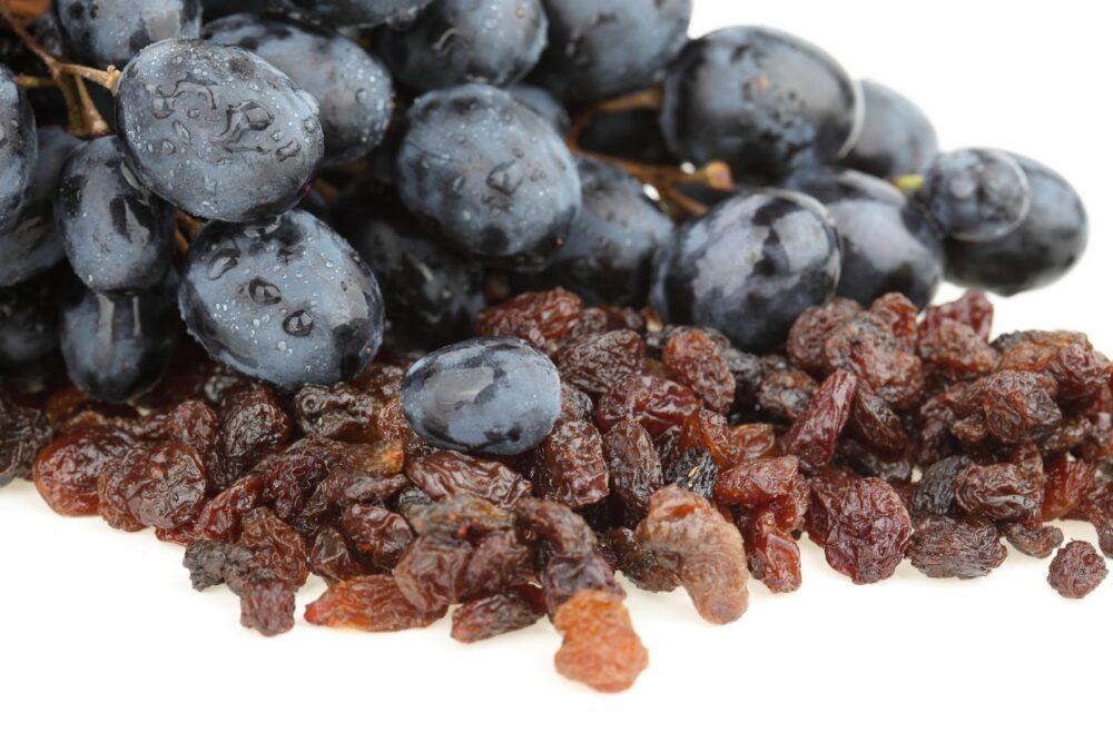 Las uvas y las pasas pueden causar una rápida insuficiencia renal, que a la larga puede ser mortal para perros