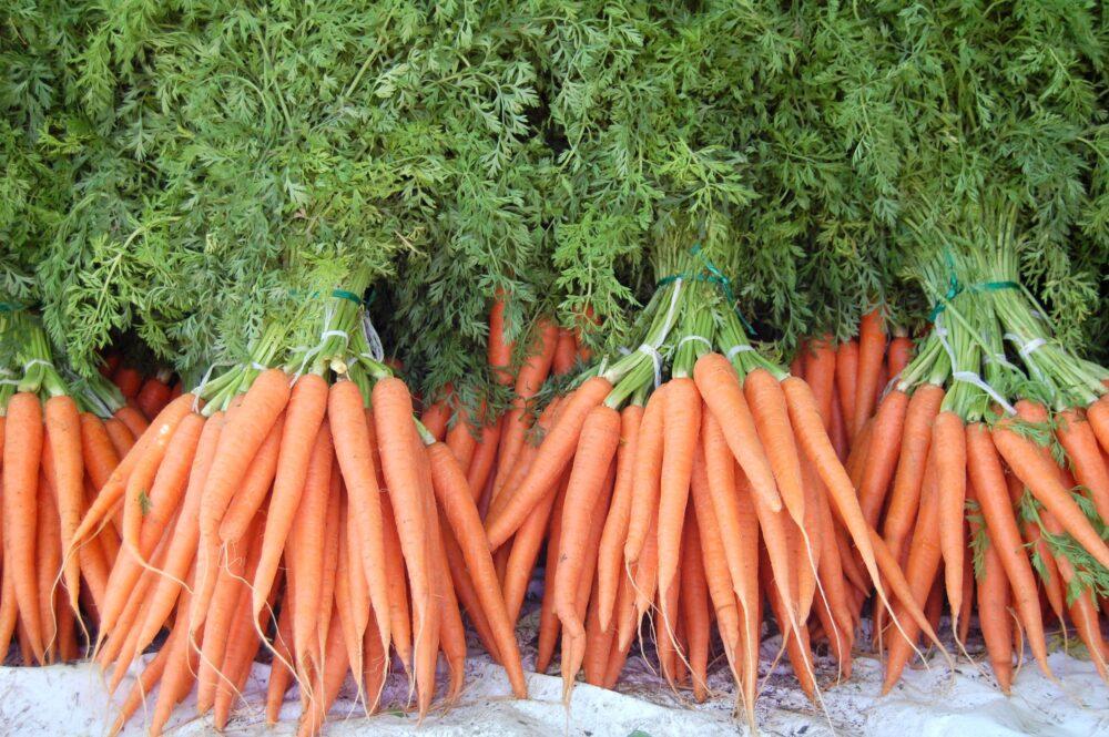 Las zanahorias bebé son un alimento cada vez más popular como snack
