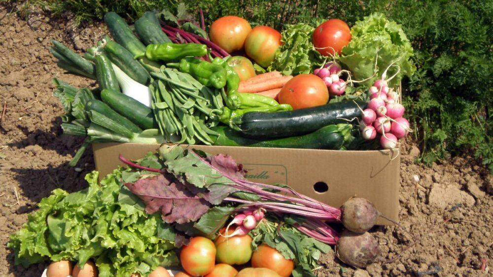 Los 10 mejores alimentos para aumentar los niveles de óxido nítrico