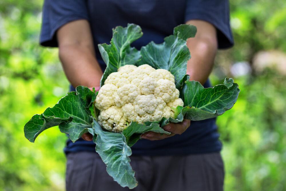 Los 8 principales beneficios de la coliflor para la salud