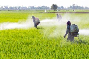 ¿Los pesticidas en los alimentos están dañando su salud?