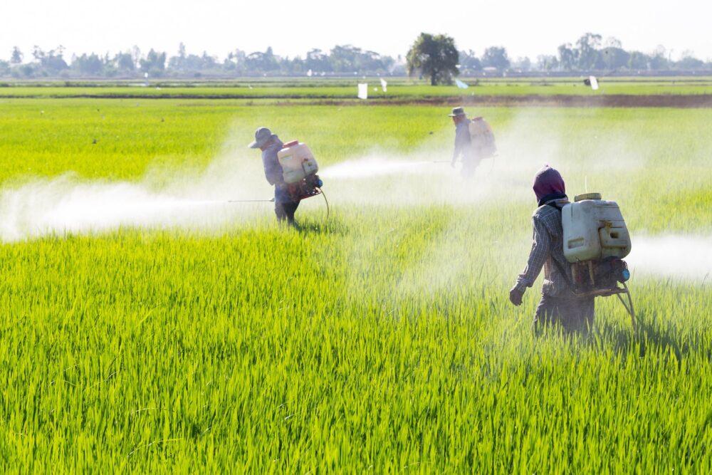 Los pesticidas en los alimentos están afectando la salud