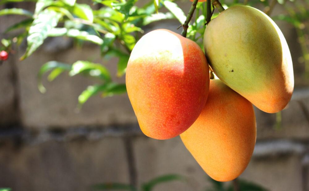 Mango: Nutrición, beneficios para la salud y cómo comerlo