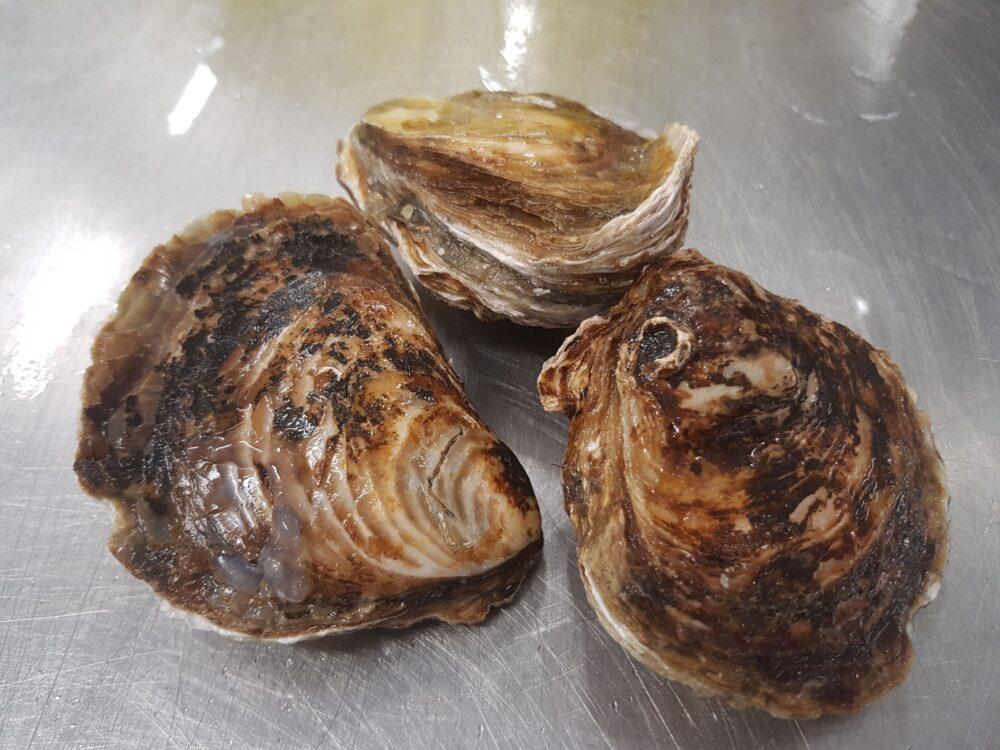 Otros riesgos de las ostras