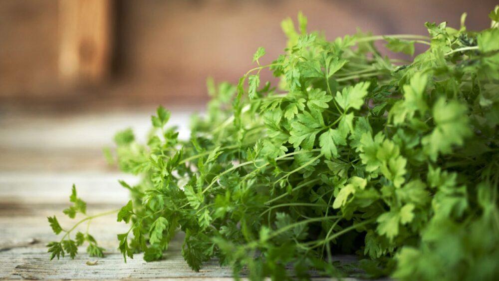 Perejil: una hierba impresionante con beneficios para la salud