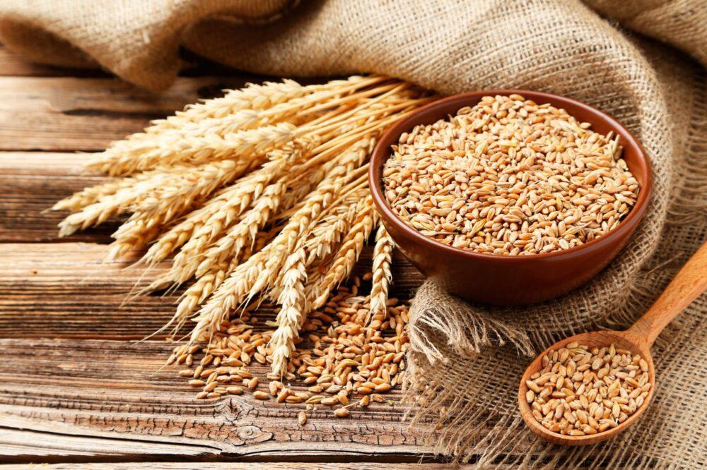 Trigo: Datos sobre nutrición y efectos en la salud